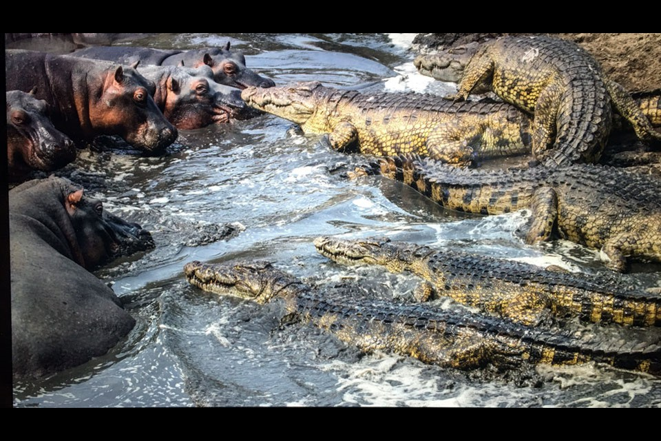 Crocodiles & Hippos by Ken Carroll