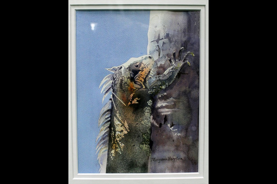 Iguana by Maryann Burton